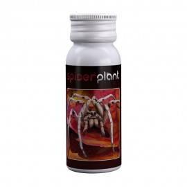 Spider Plant 15ml