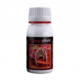 Spider Plant 60ml
