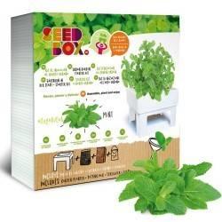 SeedBox Cultívame Hierbabuena