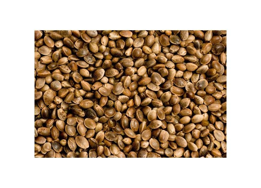 Beneficios del consumo de semillas de cañamo